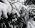 Snow (2354187099).jpg