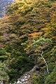 Snow monkey park, Jigokudani, Yudanaka (6290128164).jpg