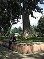 Srinagar - Shalimar Gardens 56.JPG