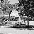 Stadspark met bomen en een fontein, vermoedelijk Diezengoff Circle Square, Bestanddeelnr 255-1749.jpg