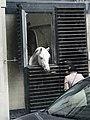 Stallburg stallion Spanish Riding School 09.jpg
