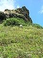 Starr-050419-0400-Schinus terebinthifolius-habit-Mokolii-Oahu (24119192273).jpg