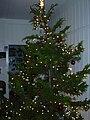 Starr 031207-0023 Cryptomeria japonica.jpg