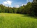 Steigerwald Wiese Hirschbrunnenbach 5260024.jpg
