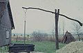 Stooked reeds, hut, counter-weighted well. Neusiedl. 1965 (24442038248).jpg