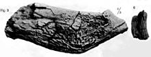 Photo of dinosaur jawbone and tooth
