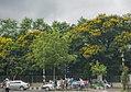 Summer Colours- Dhaka (26302083990).jpg