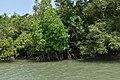 Sundarban Tiger Reserve and mangrove forest, West Bengal 20.jpg