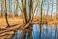 Tůně v NPR Bohdanečský rybník 10.jpg