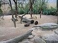 Tachyglossus aculeatus in Adelaide Zoo.jpg
