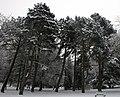 Tall trees (5277393789).jpg