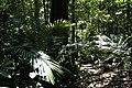Taman Negara, Malaysia, Tropical rainforest.jpg