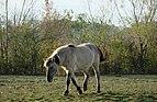 Tarpan DSCF9051.jpg