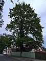 Tartu (35088275602).jpg