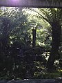 Tasmania gardens sun filtering through.jpg