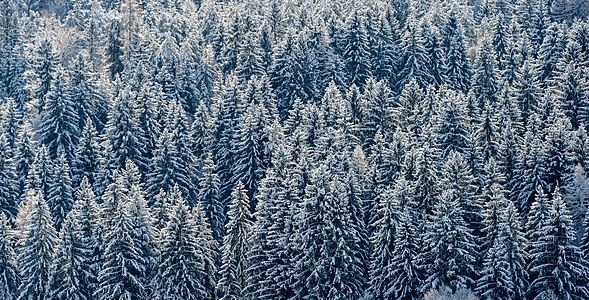Winterly forest in Techelsberg, Carinthia, Austria