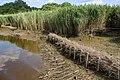 Technisch-biologische Ufersicherung an der Wümme, Versuchsstrecke 1 (50678791682).jpg
