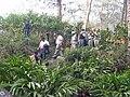 Tehrathum cash crop cardamom.JPG