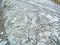 Temagami greenstone belt pillow lava3.jpg
