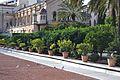 Testos amb tarongers, jardí de les Hespèrides de València.JPG