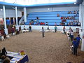 Texas State Fair goatshow.jpg