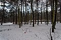 Texel - Eksterlaan - Winterview North.jpg