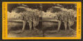 The Altar, from Robert N. Dennis collection of stereoscopic views 2.png