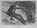 The Army of the Potomac – A Sharp-Shooter on Picket Duty – From a Painting by Winslow Homer, Esq. (Harper's Weekly, Vol. VII) MET MM7284.jpg
