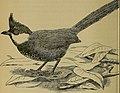 The Avicultural magazine (1908) (20358158951).jpg