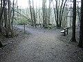 The Green Bridge Trail, Chatelherault Country Park - geograph.org.uk - 134286.jpg