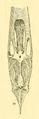 The Osteology of the Reptiles-107 kujhbvghghbv g f.png