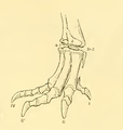 The Osteology of the Reptiles-209 dfg ghj dertg ftgy ty t r4.png