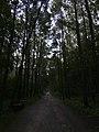 The Road in the Troparyovskiy Park.jpg