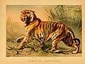 The animal kingdom (Plate VII) (6129693551).jpg