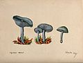 The fragrant agaric or aniseed toadstool (Clitocybe odora); Wellcome V0043338.jpg