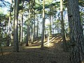 The hill in Ambarrow Woods - geograph.org.uk - 653375.jpg