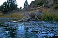 The mighty John Day River (25218766285).jpg