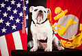 The official mascot of the Marine Corps, English bulldog Pfc. Chesty the XIV, poses for his official photo at Headquarters Marine Corps Combat Camera in the Pentagon, Arlington, Va, May 15, 2013 130515-M-KS211-001.jpg