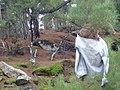 The scarecrow at Pezi.jpg