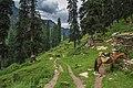 The trek that goes to Musa ka Musallah.jpg