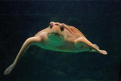 Tortugas oaxaca