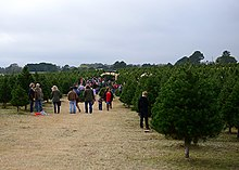 Christmas Tree Production Wikipedia
