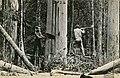 Tree loggers (2570007244).jpg