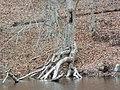 Tree resting by (23812714719).jpg