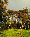 Trees - panoramio (18).jpg
