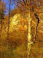 Trees In Light - panoramio.jpg