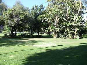 Holmby Park - Image: Trees in Holmby Park, Holmby Hills, Los Angeles, California