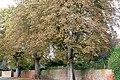 Trees on Parkside Road - geograph.org.uk - 987849.jpg