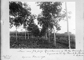De Nieuwe Grond Resort in Wanica District, Suriname