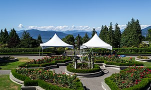 Rose Garden At The University Of British Columbia In Vancouver, British  Columbia, Canada